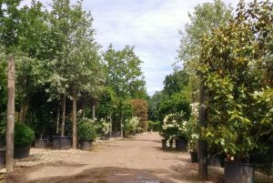 A comprehensive range of tress available at our Tree Nursery