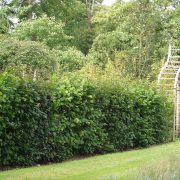 Native mix hedge in private garden