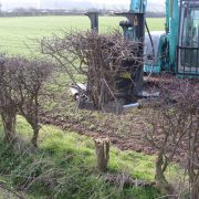 Woodland translocation: Hedges reduced for transplanting