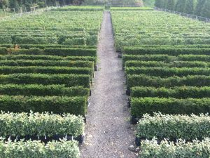 Practical Instant Hedge in production