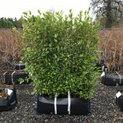 Broadlef Practical Instant Hedge